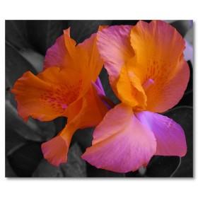 Αφίσα (λουλούδι, χρώματα, φύση)